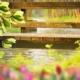 Flores de Bach - Paloma Carbonell